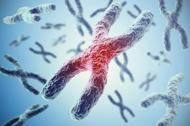 染色体の異常が関係
