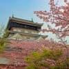 春はお花見!子どもに見せたい福岡県の桜スポット3選