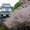 春はお花見!子どもに見せたい長崎県の桜スポット3選