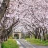 春はお花見!子どもに見せたい佐賀県の桜スポット3選