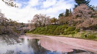 子どもに見せたい山形県の桜スポット10選