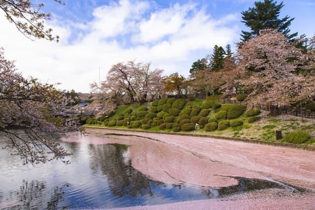 山形の桜スポット