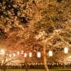 春はお花見!子どもに見せたい鹿児島県の桜スポット3選
