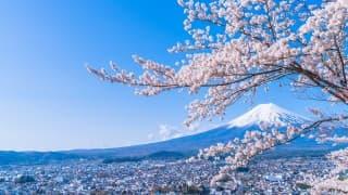 春はお花見!子どもに見せたい山梨県の桜スポット9選