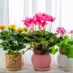 部屋にお花や緑を飾る「花育」は子どもにいいことがいっぱい