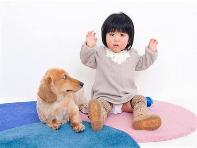 赤ちゃんと犬