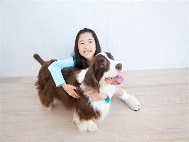 大型犬と女の子