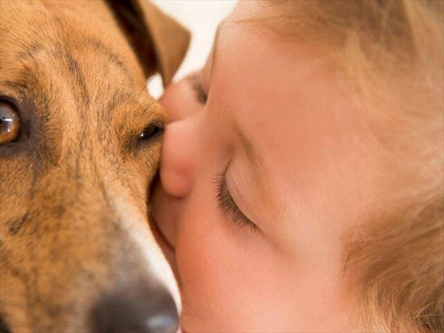 0歳の男の子と犬
