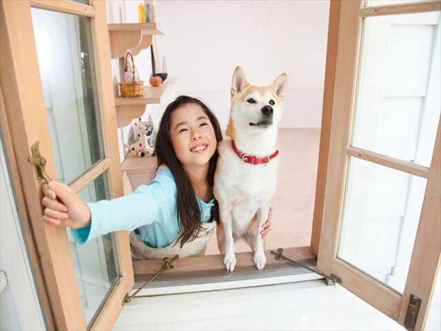 外を見る犬と女の子