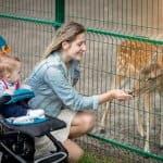 赤ちゃんはいつから動物園にいける?動物園に興味をもつ時期について