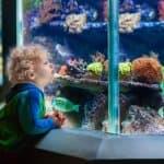赤ちゃんはいつから水族館にいける?水族館に興味をもつ時期について