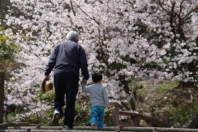 おじいちゃんと桜