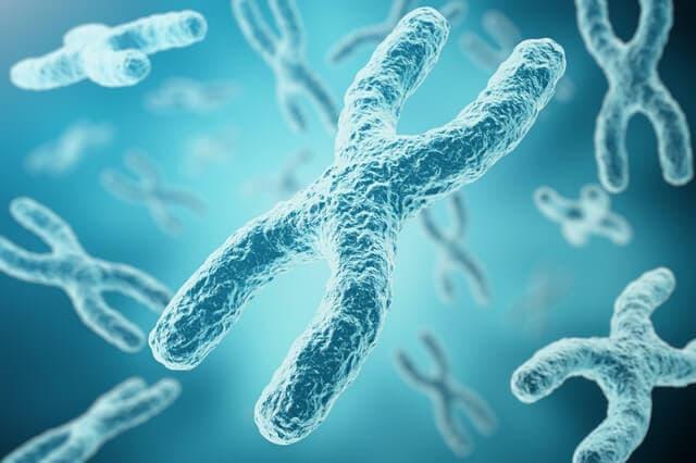 染色体のイメージ