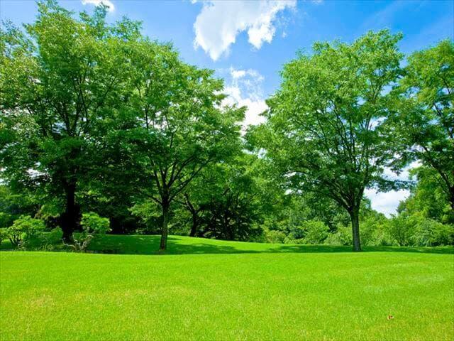 自然豊かな公園で過ごす