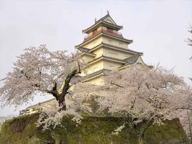 桜のスポット