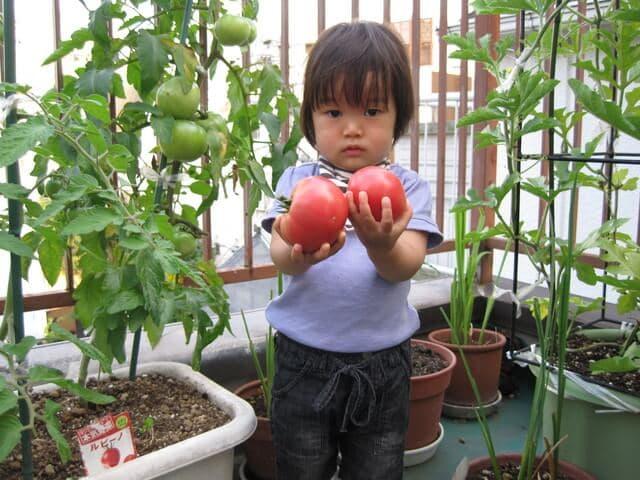 ベランダ菜園の女の子