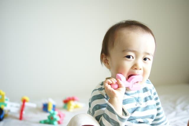 おもちゃを食べる