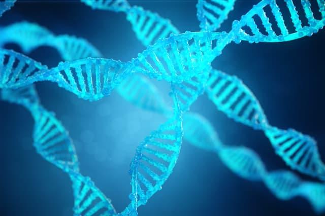 DNAの羅列