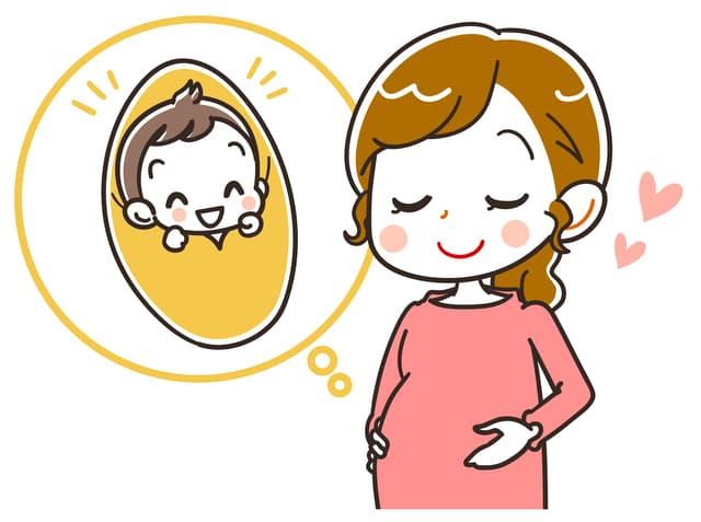 胎盤の役割