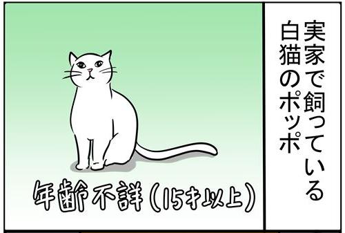 四コマ11回